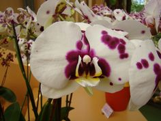 Orchid.... I have this color... Love it