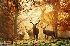 Realm of the Deer; photograph by Alex Saberi. Richmond park, London