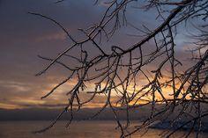 Title  Toronto Ice Storm 2013 - A Sunrise Through The Icy Branches   Artist  Georgia Mizuleva   Medium  Photograph - Fine Art Photograph
