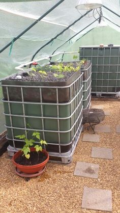 Aquaponics in 330 gallon IBC Totes