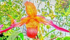 A flying orchid