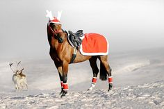 Cute santa riding rug with nice white edge straps with buckles that