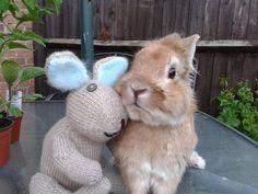 Onoodles bunny with Rudii RIP x