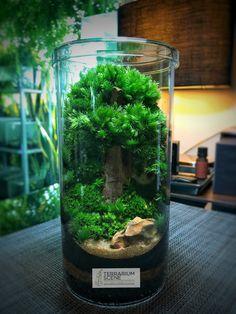 doodle design garden fairies - Internal Home Design Terrarium Scene, Mini Terrarium, Terrarium Plants, Garden Plants, Indoor Plants, Bottle Garden, Glass Garden, Doodle Design, Cactus Y Suculentas