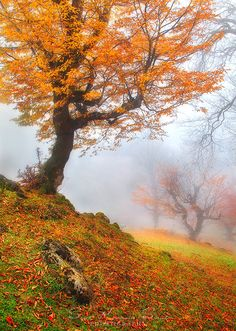 wowtastic-nature: Autumn Harmony by Seyed Mohammad Shamsi on Canon EOS Mark Photographer: Seyed Mohammad Shamsi, Rasht, Iran Landscape Photos, Landscape Paintings, Landscape Photography, Nature Photography, Fall Pictures, Fall Photos, Nature Pictures, Beautiful World, Beautiful Places