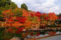 11月中旬〜下旬が見頃♡今から計画的に!名所、京都で紅葉を見たい♩