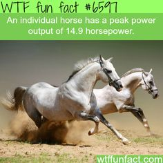 How much horsepower does an actual horse has - WTF fun facts