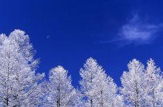 紅葉や、スキーなどのウィンタースポーツを楽しめる場所として有名ですが、実はどんな季節も楽しめる魅力に溢れています。