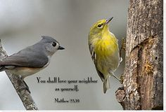 21 Best Birds Quotes Images Quotes About Birds Bird Quotes Words