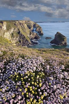 Early summer in Cornwall