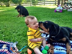 Baby and Rottweiler puppy. i grew up with a rottweiler...hopefully my kid can too :) #rottweilerpuppy