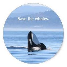 save the whales - Ecosia