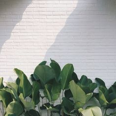 New photography nature green plants Ideas Minimalism Living, Plant Aesthetic, Aesthetic Drawing, Nature Aesthetic, Aesthetic Design, White Aesthetic, Aesthetic Grunge, Aesthetic Fashion, Modern Fashion