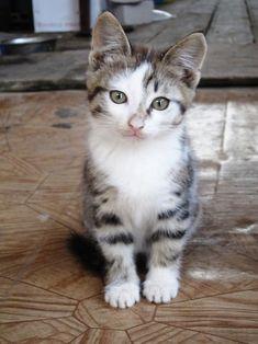 <3, killing, Kitty, Kitten, Pet, cute, nuttet, adorable, precious, sweet, photo