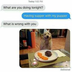 Hilarious Text About A Funny Dog