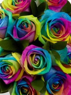 This is a perfect example of POLYCHROMATIC harmony. These roses have every colour in the colour wheel!