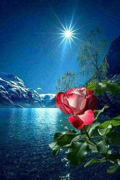 Resultado de imagem para rosana 100 by mobile screensavers Beautiful Flowers Wallpapers, Beautiful Nature Wallpaper, Beautiful Moon, Pretty Wallpapers, Beautiful Roses, Good Night Dear, Image Nature, Love Rose, Flower Wallpaper