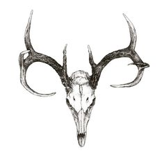 animal skulls with horns - Google Search