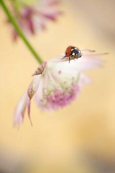 Photograph Spring lady by Mirka Wolfova on 500px