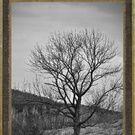 Photographe de Sherbrooke Collection on Society6.