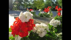 🌾✿A tour of the beautiful flower gardens at church✿🌾