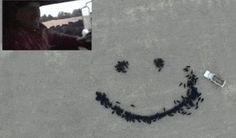 To ste ešte nevideli: Farmár vyrába obrázky naháňaním dobytka