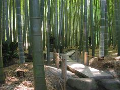 Bamboo forests <3