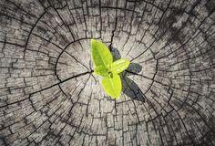 La resiliencia es la resistencia frente a la adversidad junto a la capacidad para reconstruirse saliendo fortalecido del conflicto lo que caracteriza a la...