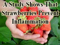 Read a study which claims that strawberries prevent inflammation. Adding it to your diet may just improve your health. Learn more http://www.extremenaturalhealthnews.com/a-study-shows-that-strawberries-prevent-inflammation/
