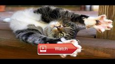 Cute Cats Dogs always make you laugh Funny Cat Dog  Cute Cats Dog always make you laugh I will upload more and more Cute Funny Dogs Cats Puppies Kittens Animals Babies Videos Compilation  on Pet Lovers