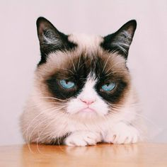 Tardar Sauce The Grumpy Cat is the cutest cat on Earth. :)