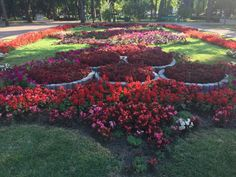 Any Moldova vacation would include visiting the roses in Stephan cel Mare park Stuff To Do, Things To Do, Moldova, Travel Advice, Romania, Vacations, Destinations, Roses, Wallpapers