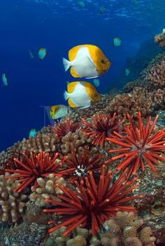 Fishes Of The Beautiful and Colourful Underwater World Life.