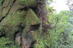 Племената аракмбут, населяващи перуанската джунгла в региона Мадре де Диос, показаха пред света тотем, до този момент грижливо пазен в тайна. Ето защо. Ficus, Macao, Parc National, Plants, Travel, Cedar Trees, Harpy Eagle, Hu Ge, Antigua