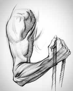 There's three main groups: the flexors and extensors each take one half of the forearm, and the ridge muscles sit on top like a little tiara. Each group has it's own unique form. Arm Drawing, Human Anatomy Drawing, Human Figure Drawing, Figure Sketching, Body Drawing, Life Drawing, Cool Art Drawings, Pencil Art Drawings, Art Drawings Sketches