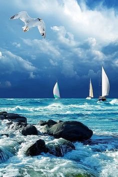 Seagull, sailboats, and waves crashing on rocks. #KMLIFESABEACH