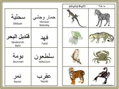 A Muslim Child is Born: Animals: Arabic Vocabulary Activities