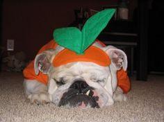 #Pets #Halloween Ideas