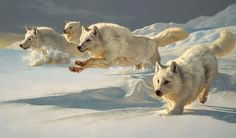 La chasse est quelque chose de décisif pour la survie des membres de la meute. Cette responsabilité retient sur les épaules de la louve Alpha.