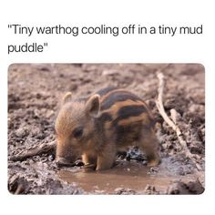 Roundup Of Cute Animal Memes & Images Memes) - Funny animal pictures Cute Animal Memes, Cute Animal Pictures, Cute Funny Animals, Funny Cute, Funny Pictures, Animal Quotes, Cute Little Animals, Cute Creatures, Animals Beautiful