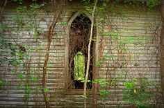 "by Scott Garlock :""Nature's Stained Glass"" Mother Nature has found a suitable replacement for the long missing vaulted windows of this abandoned Halifax Co. NC church! Summer's green livery and intertwined vines adorned with fallen pine straw have filled the void nicely. (2013)"