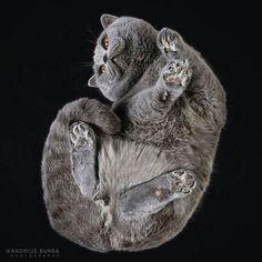 cat cats gray graycat cute foot feet paw nice