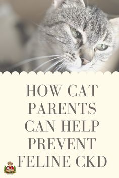 Cat parents, did you know kidney disease affects 1 in 3 cats over the age of 10? Check out our artcile where we dive deep on how you can support your cats health, special tips, tricks and food you can give your kitty to keep their kidneys healthy. Cool Cat Toys, Cool Cats, Baby Cats, Cats And Kittens, All Types Of Cats, Cat Diet, Silly Cats, All About Cats, Cat Facts