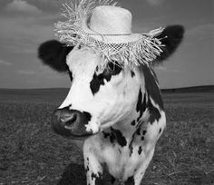 Hermione the Holstein Cow donning a UK milliner hat. Photo by Jean Baptiste-Mondino.