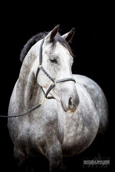 Classic horse portraits - Monika Bogner Photography - Horse photo and dog photo in Bavaria