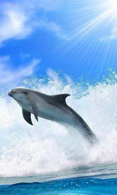 Beautiful dolphin - via kamel kamilou's photo on Google+