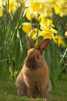Bunny enjoying a beautiful day