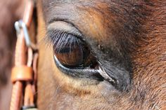 From the eye of the horse... Love my Bazle!