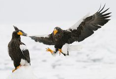 Holy Crap!! by Harry  Eggens on 500px
