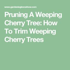 Pruning A Weeping Cherry Tree: How To Trim Weeping Cherry Trees
